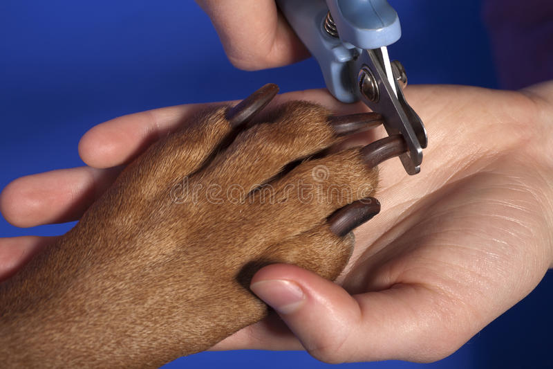 Cutting dog nail stock image