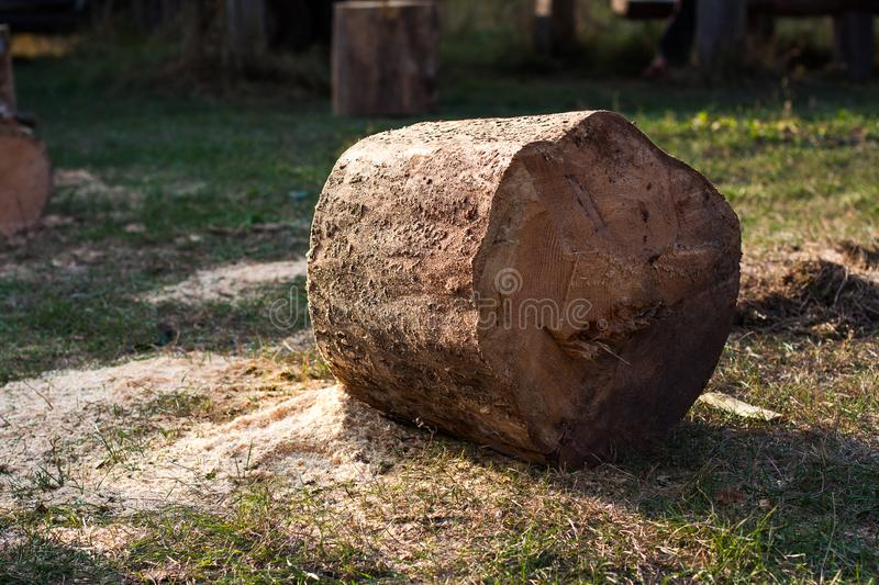 Big stump. Sawdust. Sawn logs lying on the grass on summer sunny day. Cutting down trees and forests. Sawn logs lying on the grass. Stumps of conifer. Pine sawn royalty free stock photography