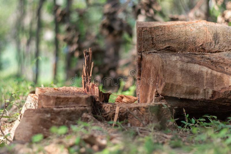 Cutting down trees in the wild leading to reducing oxygen level and ecology environmental agriculture stock photo