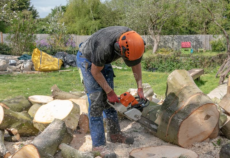 Cutting a fallen tree into sections royalty free stock photo