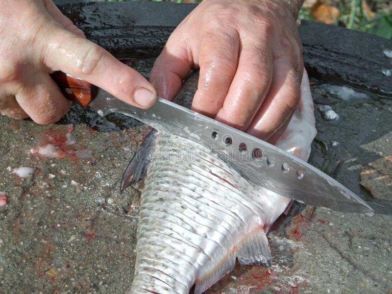 Download Cutting fish stock photo. Image of white, gray, outdoors - 12632216