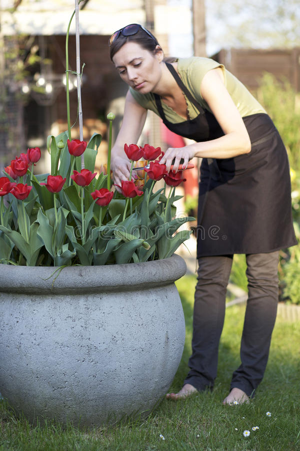 Download Cutting flowers stock image. Image of green, flowers - 26285319