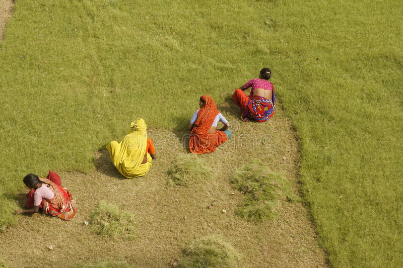 Cutting The Grass. Group of Indian woman in brightly colored saris cutting the grass by hand at the Taj Mahal in Agra, Uttar pradesh, India stock images