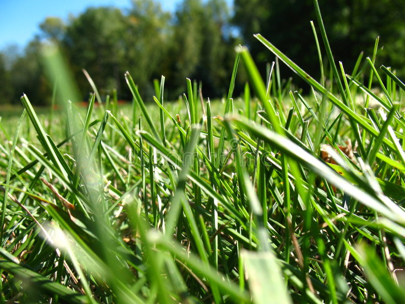 Cutting grass lawn royalty free stock image