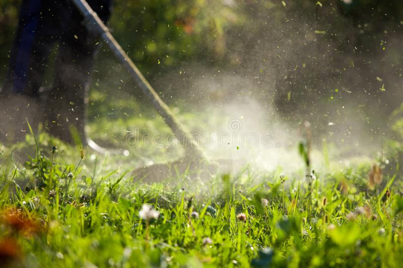 Cutting high grass trimmer royalty free stock image