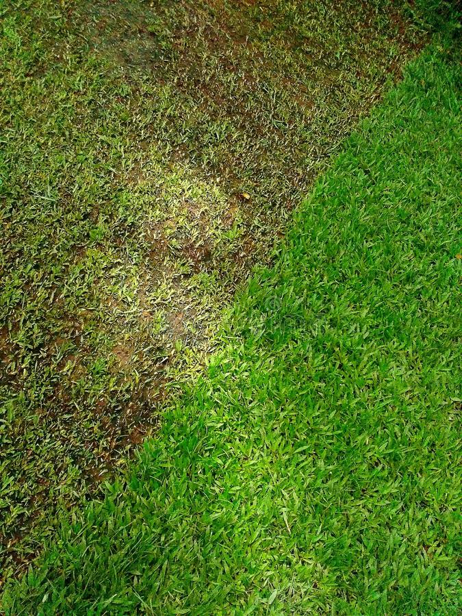 Cutting green grass royalty free stock images