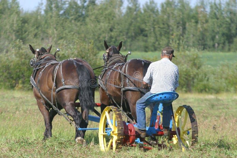 Cutting hay 3 stock photo
