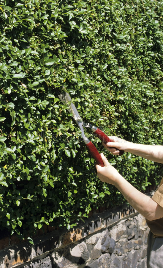 Cutting the hedge royalty free stock photos