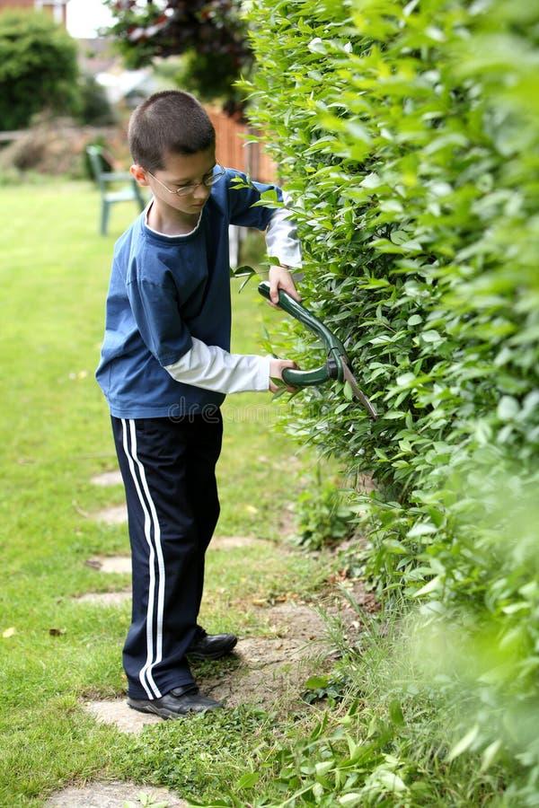 Download Cutting the hedge stock image. Image of bush, trim, gardening - 2542509