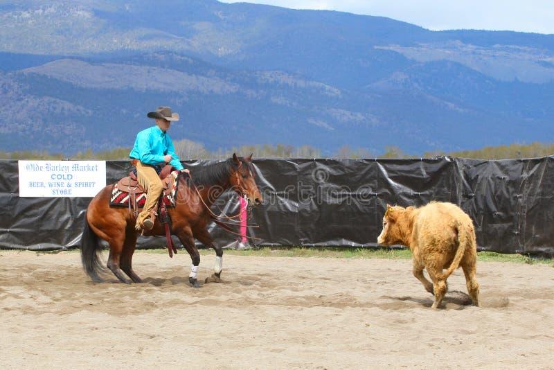Cutting Horse Show. MERRITT, B.C. CANADA - MAY 5: Cowboy during the cutting horse event at The Merritt Cutting Horse Show May 5, 2012 in Merritt British Columbia royalty free stock photography