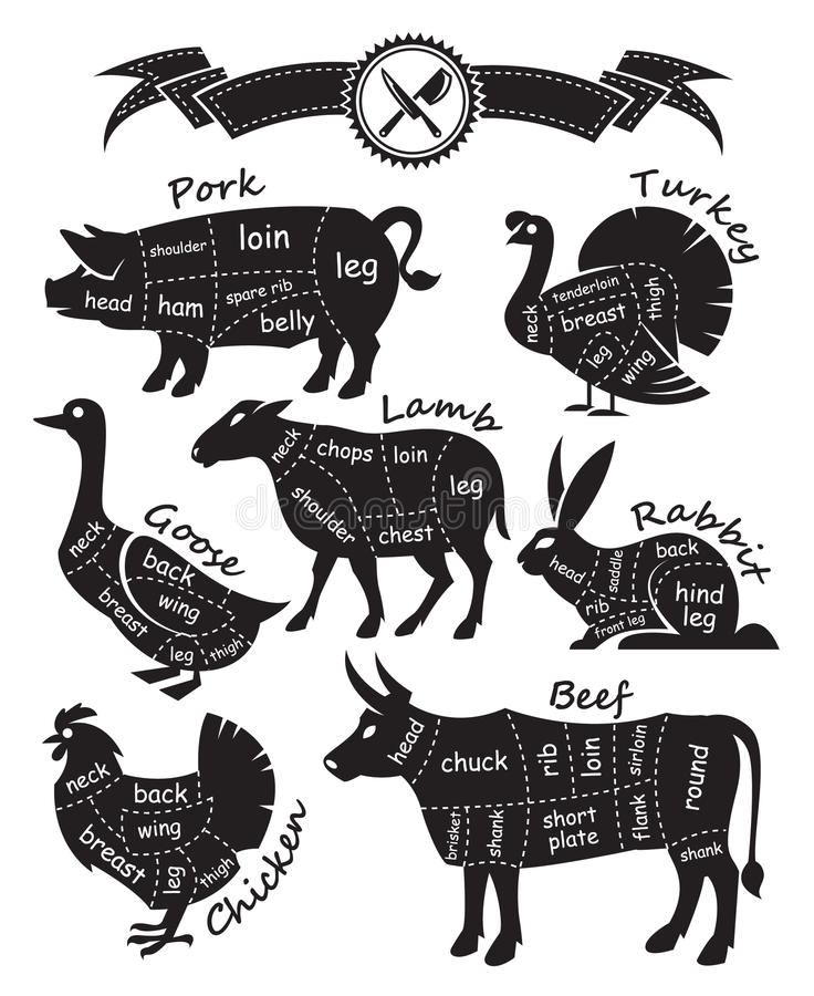 Cutting meat. Monochrome diagram guide for cutting meat