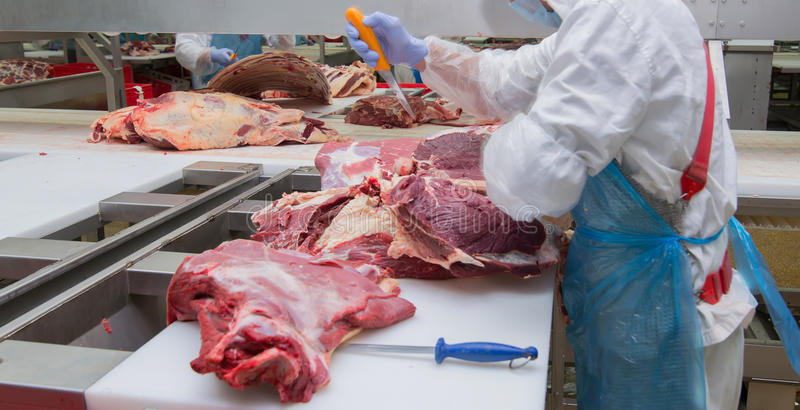 Cutting meat slaughterhouse workers in a meat factory. stock photography