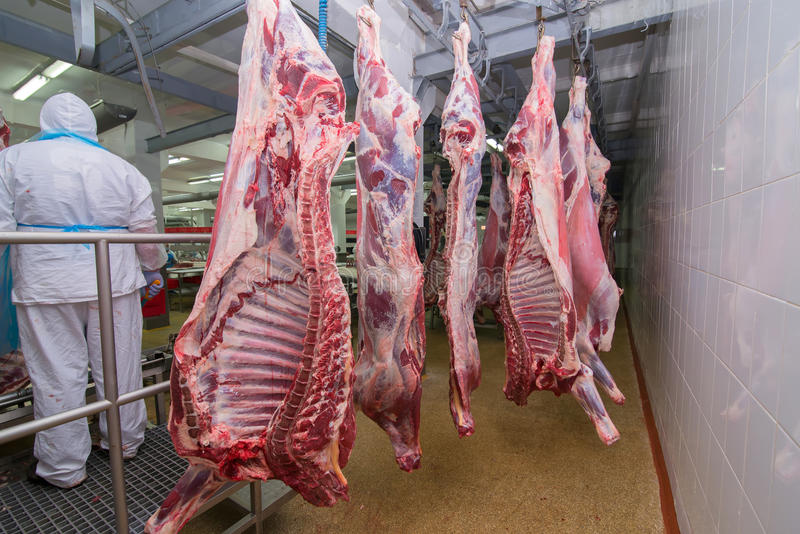Cutting meat slaughterhouse workers in a meat factory. stock photos