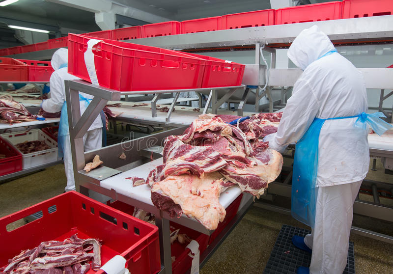 Cutting meat slaughterhouse workers in a meat factory. Cutting meat slaughterhouse workers in a meat factory stock photography