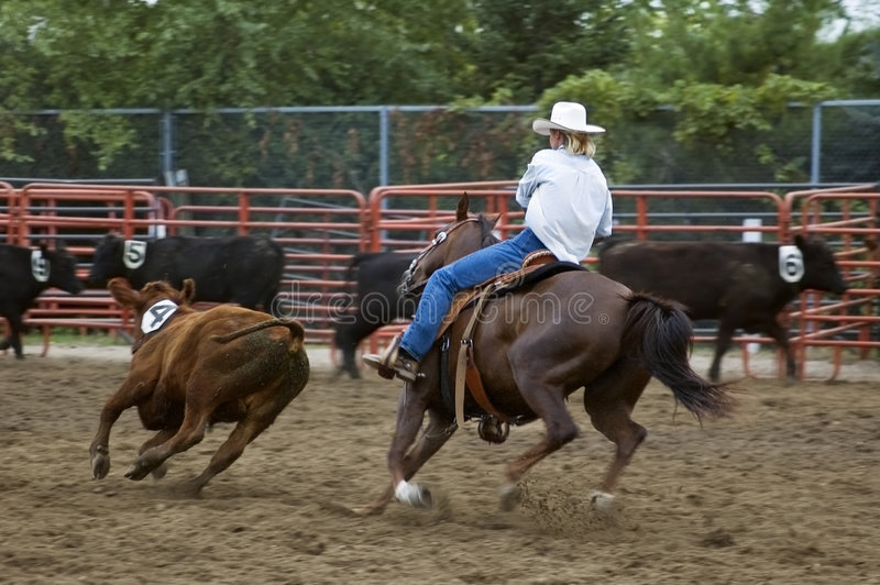 Cutting out Calf Number Four Panning and Motion Blur. Cowgirl works to cut out calf number four at county fair rodeo - panning and motion blur stock photos
