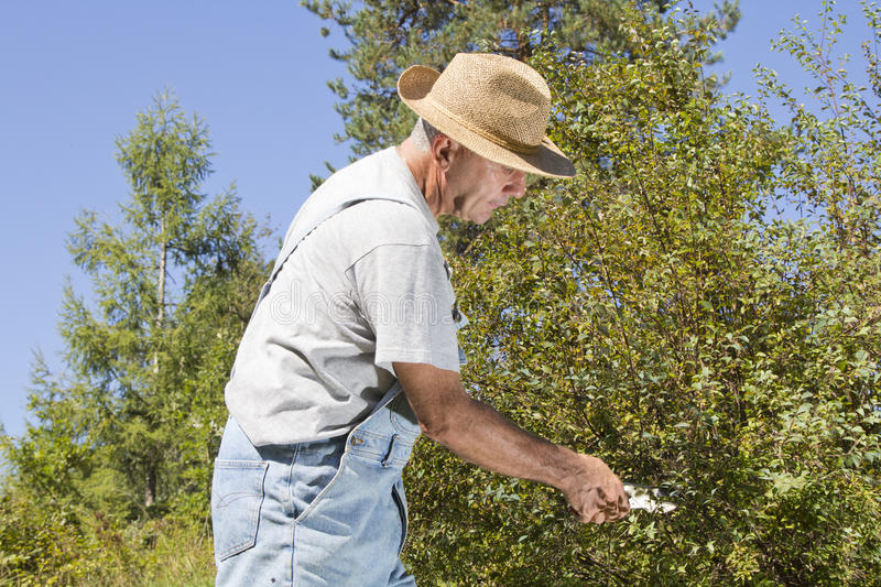 Download Cutting Tree Branches And Hedge Stock Image - Image: 26543479
