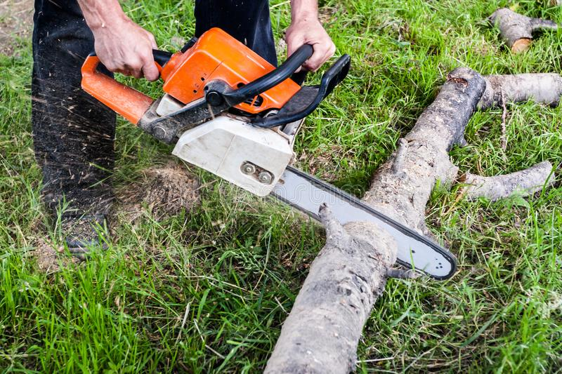 Cutting tree with a chainsaw royalty free stock photos