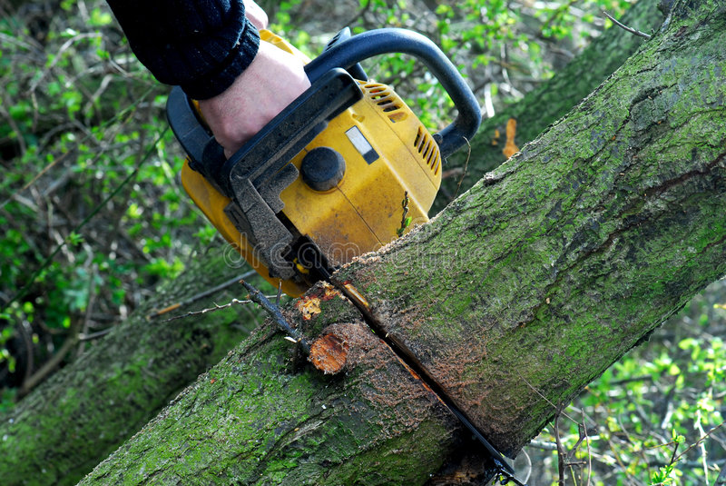 Cutting trees with chainsaw. A chainsaw cutting through a tree trunk royalty free stock photos