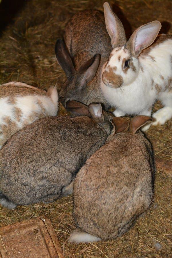 Cuty-Kaninchen in einem Käfig lizenzfreies stockbild