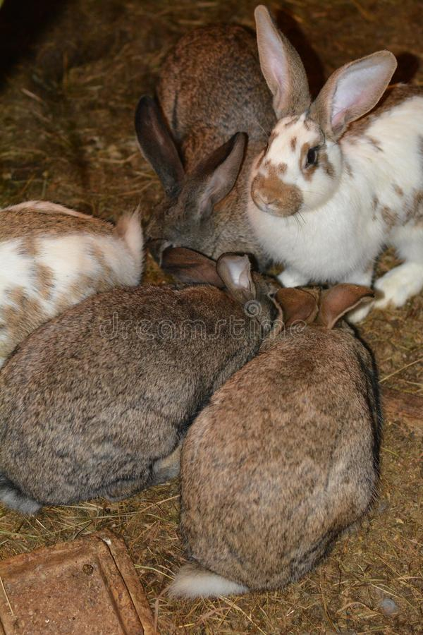 Cuty królik w klatce obraz royalty free
