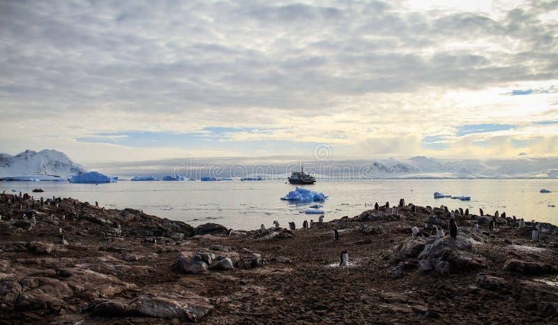 Cuverville ö, Antarktis arkivfoto