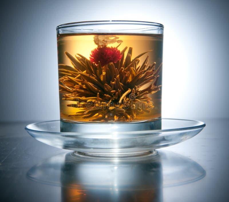 Cuvette avec du thé de floraison de fleur photos libres de droits