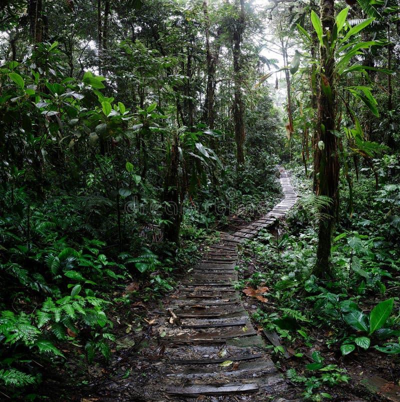 Cuvette d'enroulement de traînée de jungle la forêt amazonienne de la Colombie images libres de droits