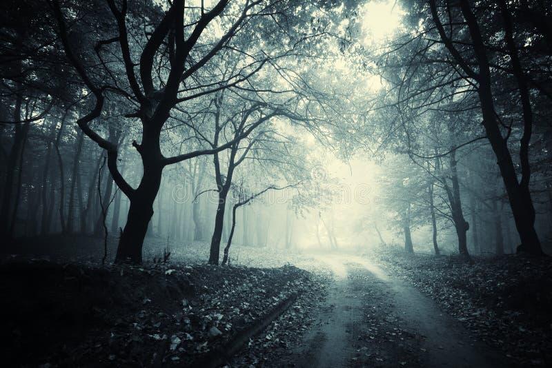 Cuvette de chemin une forêt mystérieuse foncée avec le brouillard images libres de droits