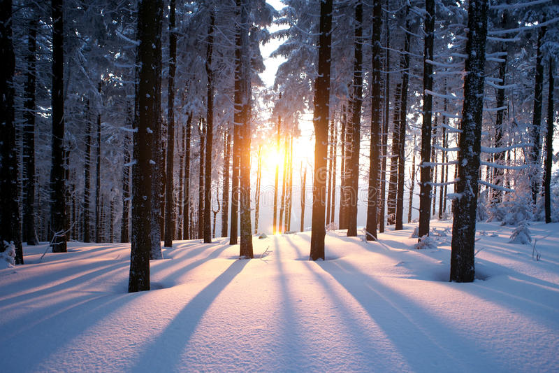 Coucher du soleil dans le bois images libres de droits