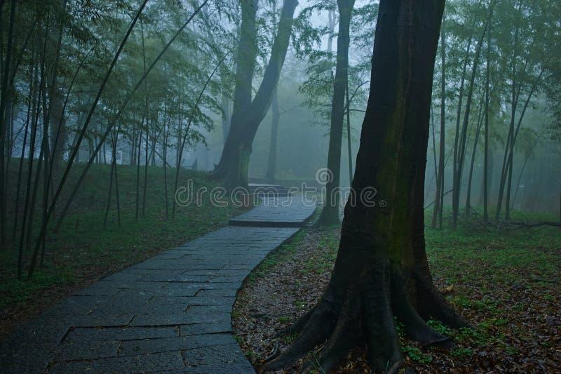 Cuvette de méandre de chemin intéressant Misty Forest photos stock