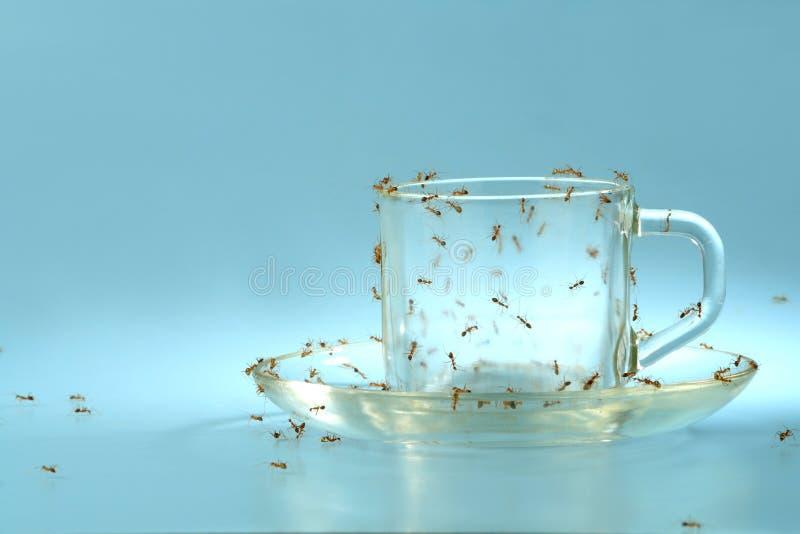 Cuvette et soucoupe avec des fourmis photographie stock