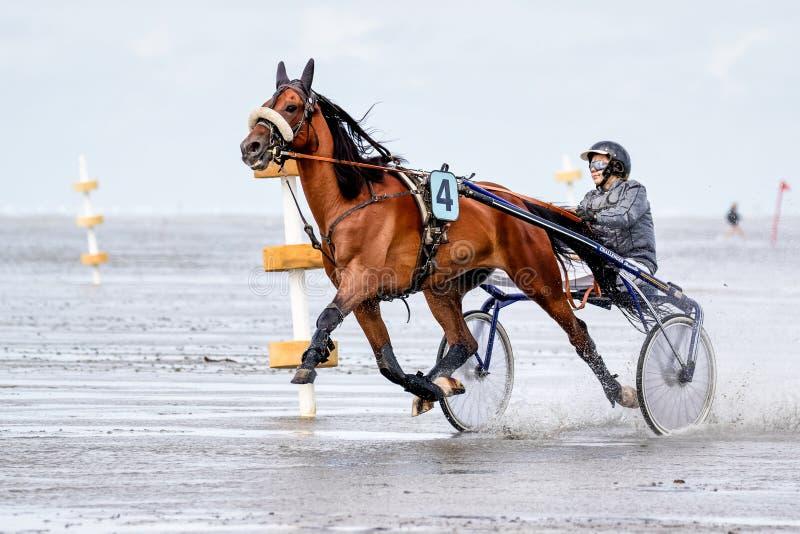 Cuxhaven, Alemania - 22 de julio de 2018: ecuestre en la carrera de caballos en el plano de fango en Duhner Wattrennen imagen de archivo libre de regalías