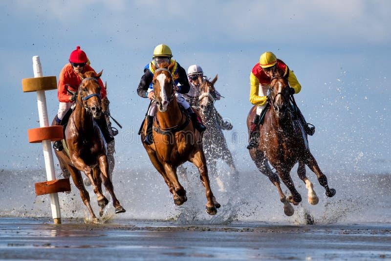 Cuxhaven, Alemania - 22 de julio de 2018: ecuestre en la carrera de caballos en el plano de fango en Duhner Wattrennen imagen de archivo