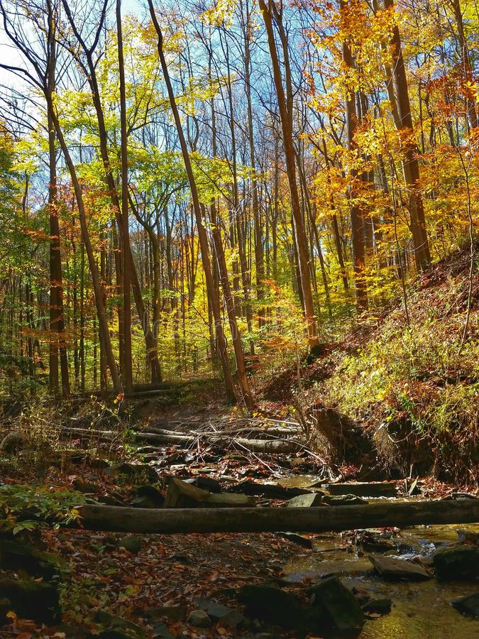 Fall color at Cuyahoga National Park stock photography