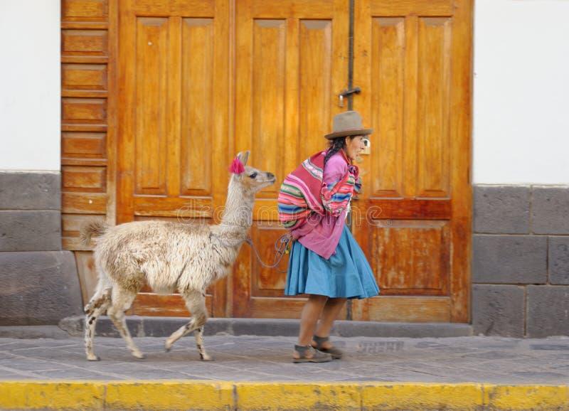 Cuzco Peru: Quechua kvinna och alpaca latin - amerikanska colrs royaltyfria bilder
