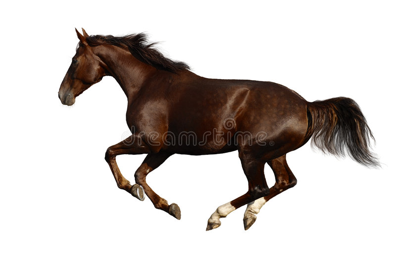 cwału konia obraz royalty free