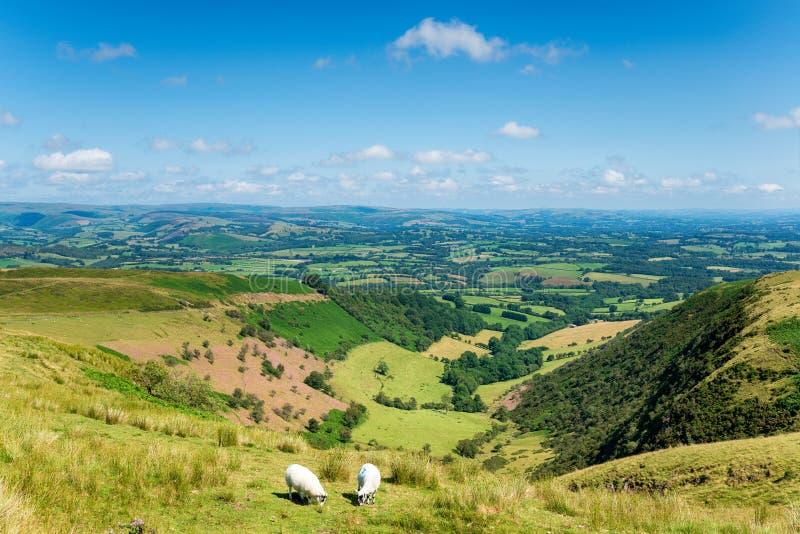 Cwm Owen in Powys in metà di Galles fotografie stock libere da diritti
