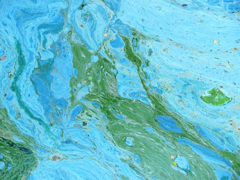 Cyanobacteria fotografia stock