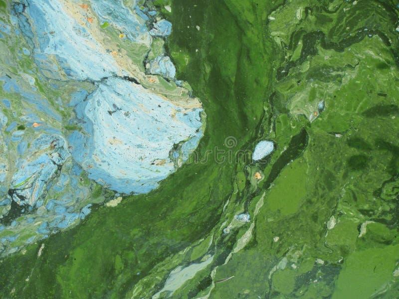 Cyanobacteria - attack av färger arkivbild
