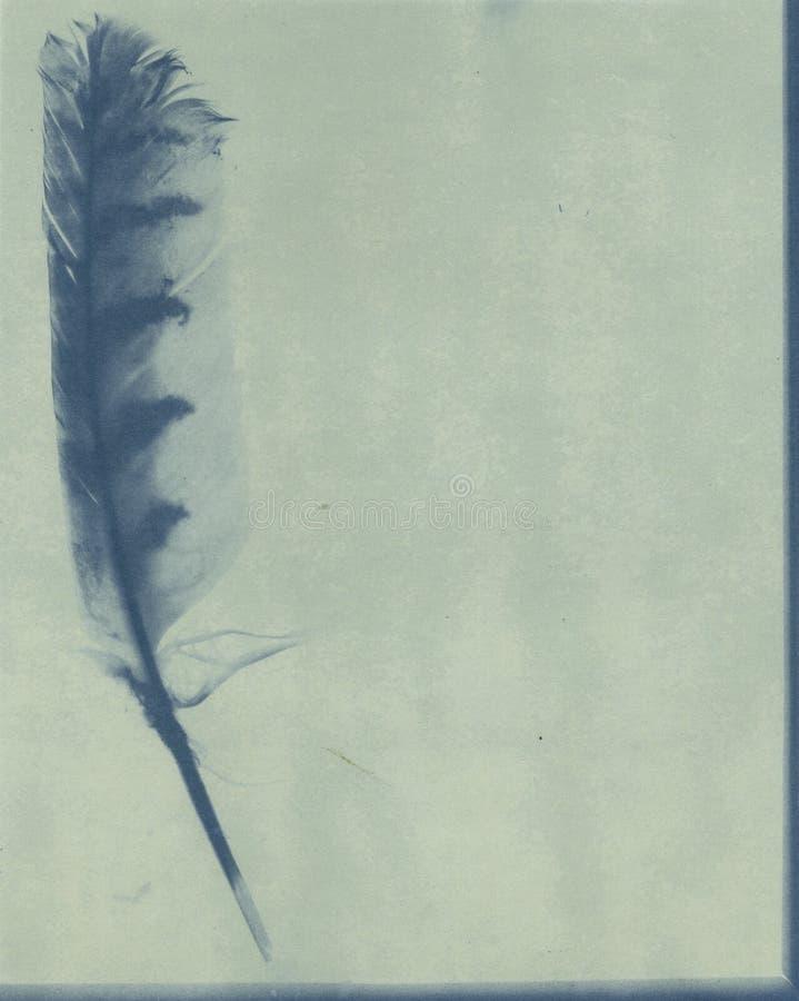 cyanotypefjäder royaltyfri illustrationer