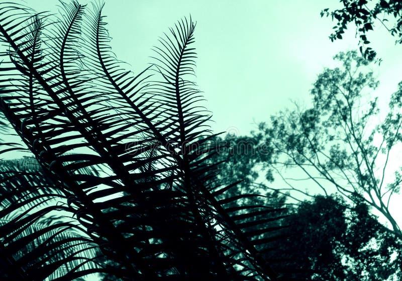 Cycad - sumário da planta imagem de stock royalty free