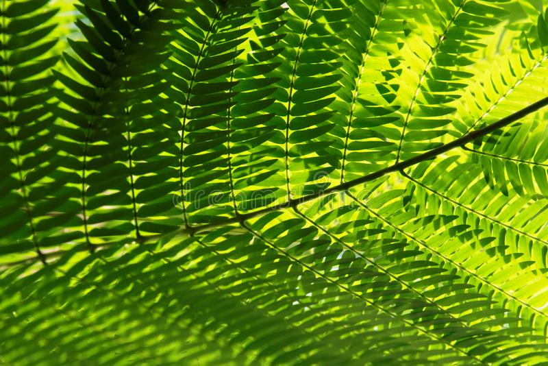 Cycads: seed plants with a very long fossil history. Cycads: seed plants with a very long fossil history that were formerly more abundant and more diverse than stock image