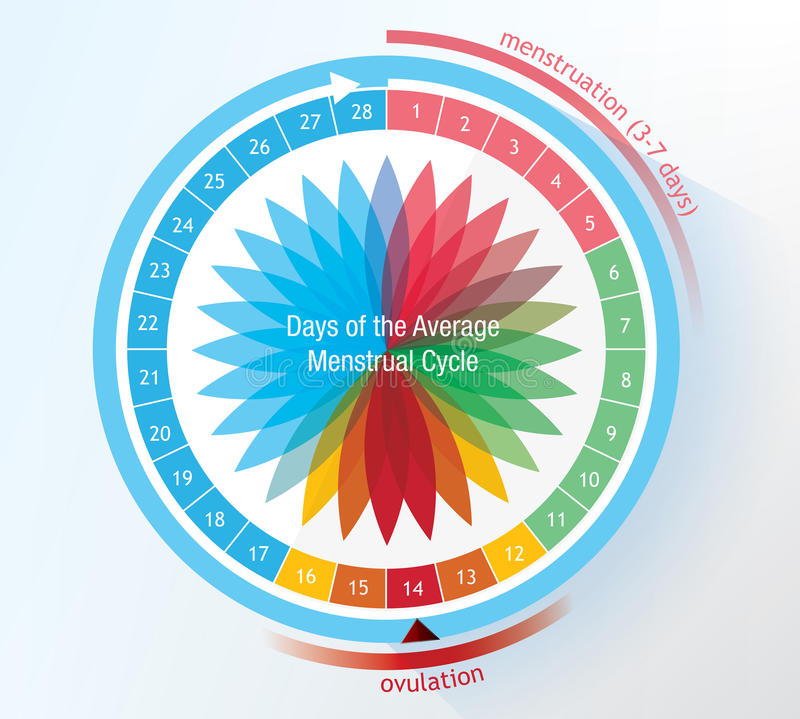 Cycle de règles illustration libre de droits