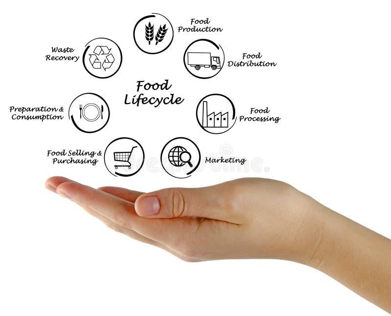 Cycle de vie de nourriture images libres de droits