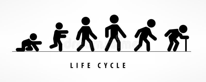 Cycle de vie et processus de vieillissement sur le blanc illustration de vecteur