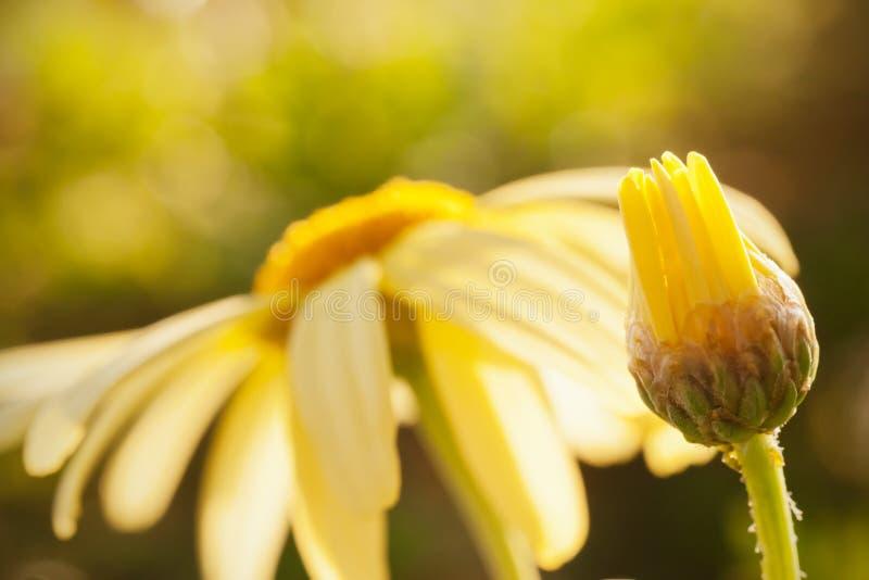 Download Cycle of life stock image. Image of botanic, spring, closeup - 22690647