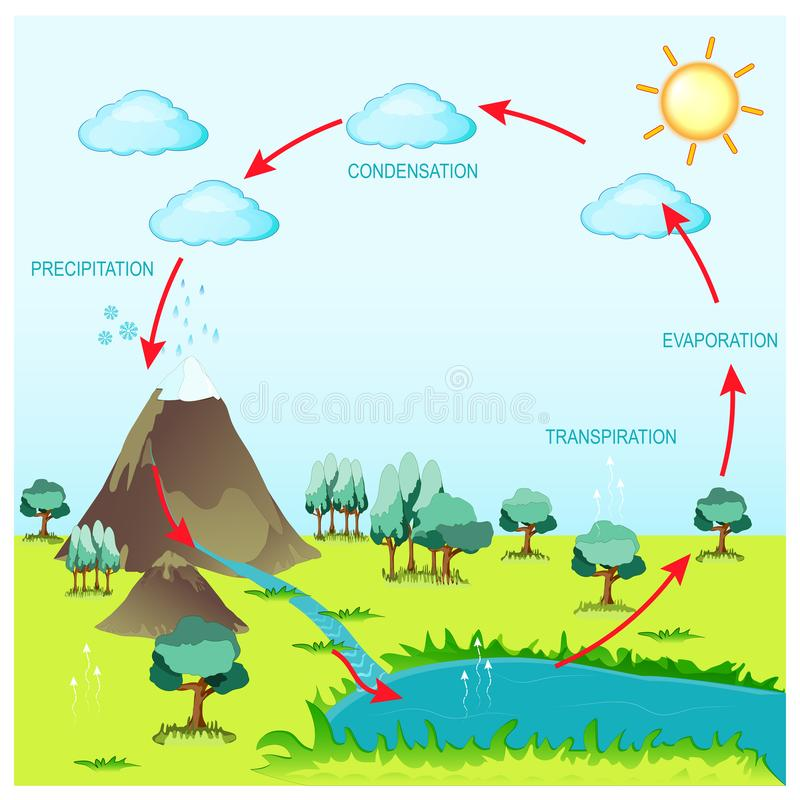 Cycle water in nature environment. The sun, which drives the water cycle, heats water in oceans and seas. Water evaporates as water vapor into the air. Vector stock illustration