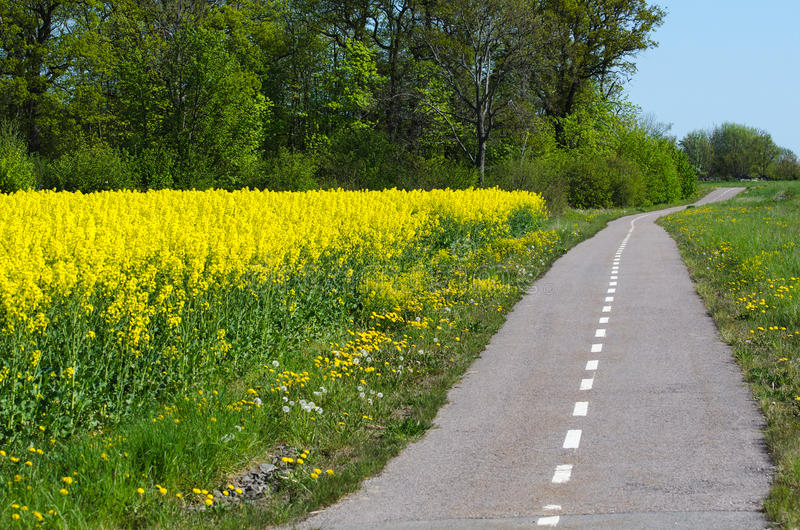 Cycleway by spring. Cycleway in a spring colored landscape stock photos