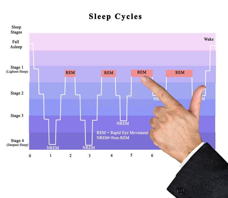 Cycli van slaap stock fotografie