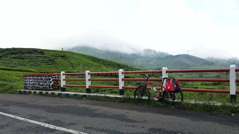 Cycling at the green tea plantation stock image